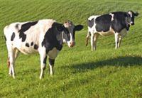 江苏探感低频RFID畜牧养殖管理